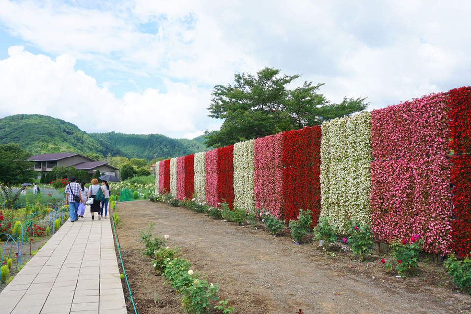 living wall in Japan
